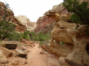 HIking Capitol Gorge